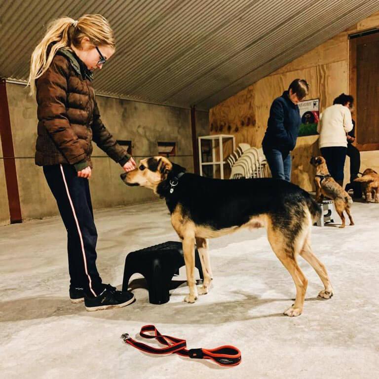 hondenschool les