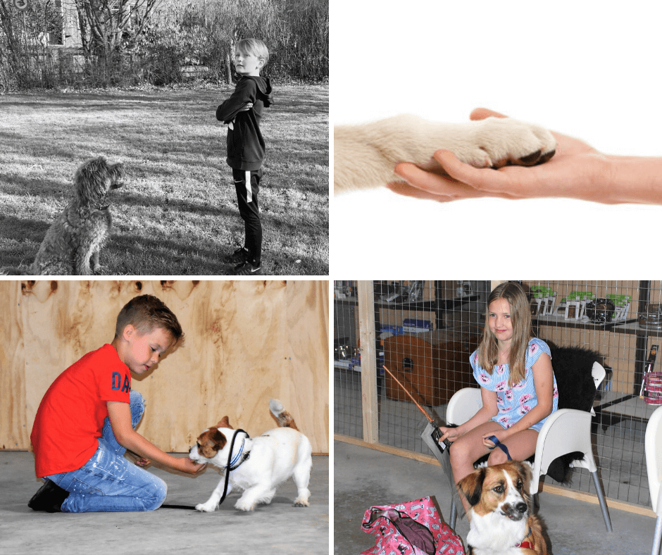 Puppy puppycursus puppytraining hondentraining hond en trainen plezier met hond kindhond kind hond training