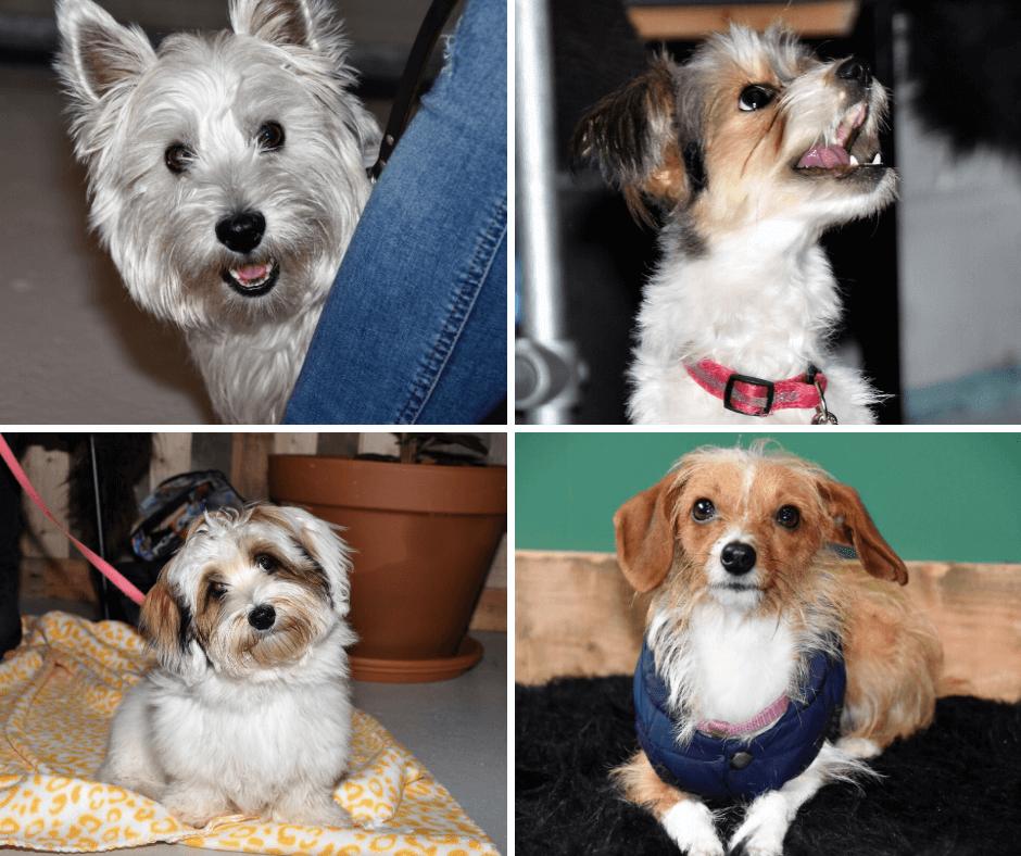 Puppy puppycursus puppytraining hondentraining hond en trainen plezier met hond